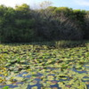 Everglades National Park.  Pond by the Observation Tower