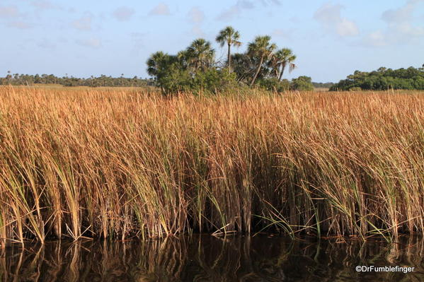 "Everglades National Park, Shark Valley's ""River of Grass"""
