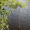 "Everglades National Park, Shark Valley's ""River of Grass"""