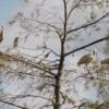 Ibis, Everglades National Park