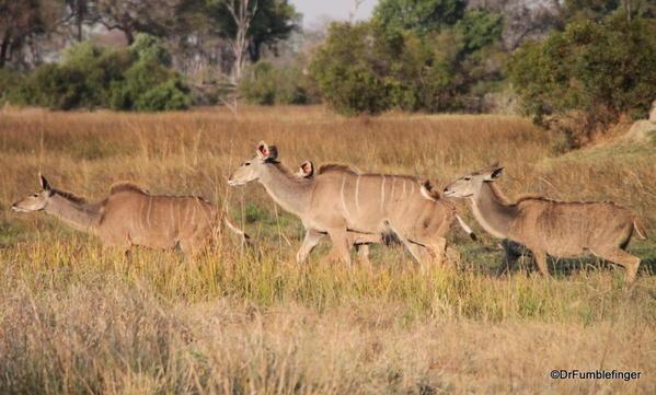 017 Botswana kudu