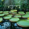 Botanic Garden - Cluj county