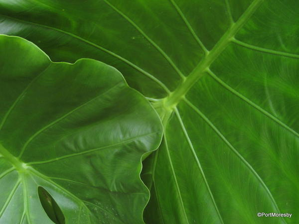 Philodendron composition.