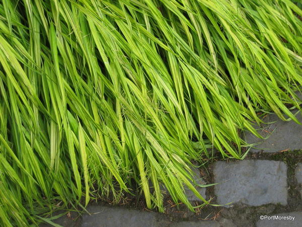 Grass at the edge.