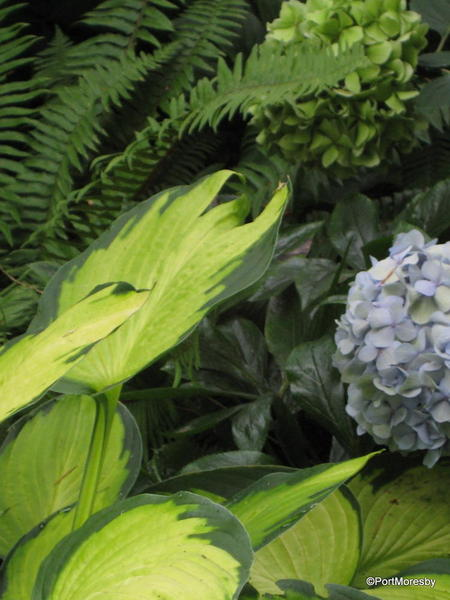 Hydrangea with green things.