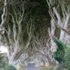 Antrim Coast. Dark Hedges