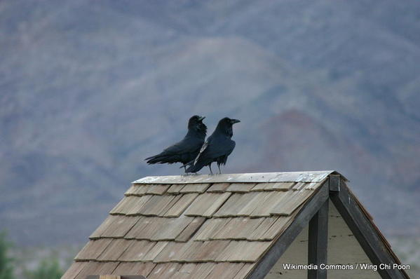 1-1024px-Avian_Friends_at_Rooftop