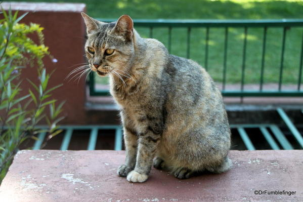 Buenos Aires, Jardin Botanico. Feral cat, one of dozens in the park