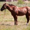 Street Scenes, El Calafante.: A content well-fed horse