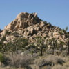 Joshua trees and some unusual rock formations,  Joshua Tree National Park