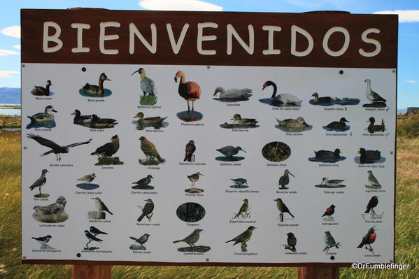 El Calafate, Argentina. Some of the birds found at the Laguna Nimez Nature Preserve