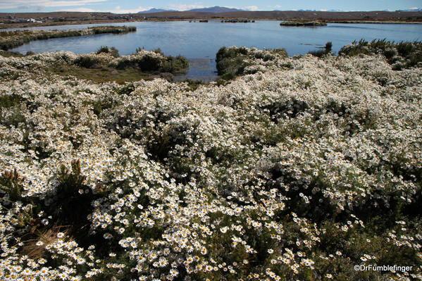 El Calafate, Argentina. Laguna Nimez Nature Preserve