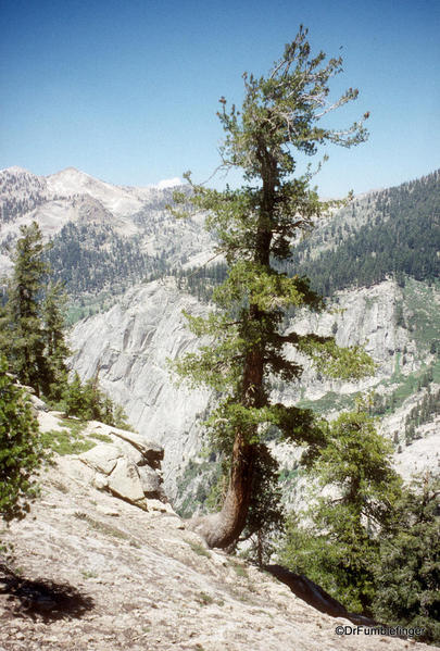 Topokah Valley, The Lakes Trail, Sequoia National Park