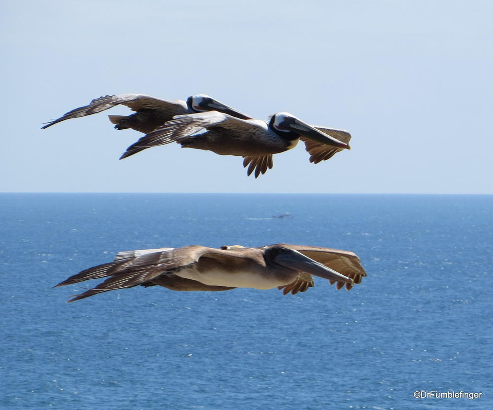 Crystal cove state park newport beach california travelgumbo crystal cove state park pelicans gliding by in formation nvjuhfo Image collections