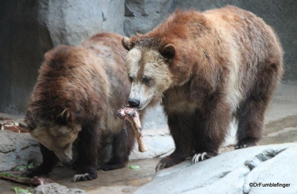 Grizzly Bears, San Diego Zoo