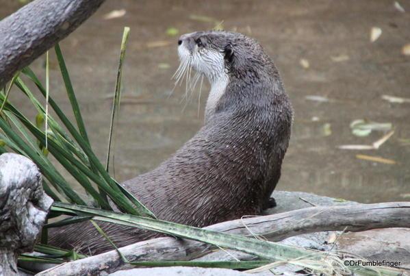 Otter, San Diego Zoo
