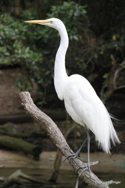 Egret, San Diego Zoo