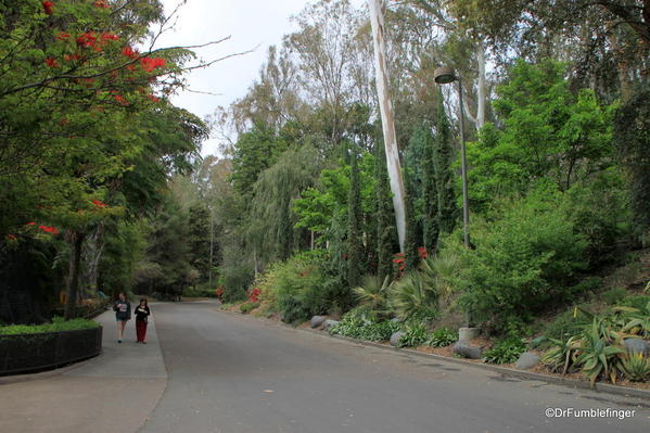 San Diego Zoo -- one of the many lovely lanes on which to walk