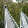 rainforest walk 1