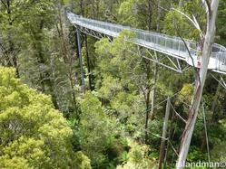 rainforest walk 2