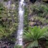 rainforest waterfalls
