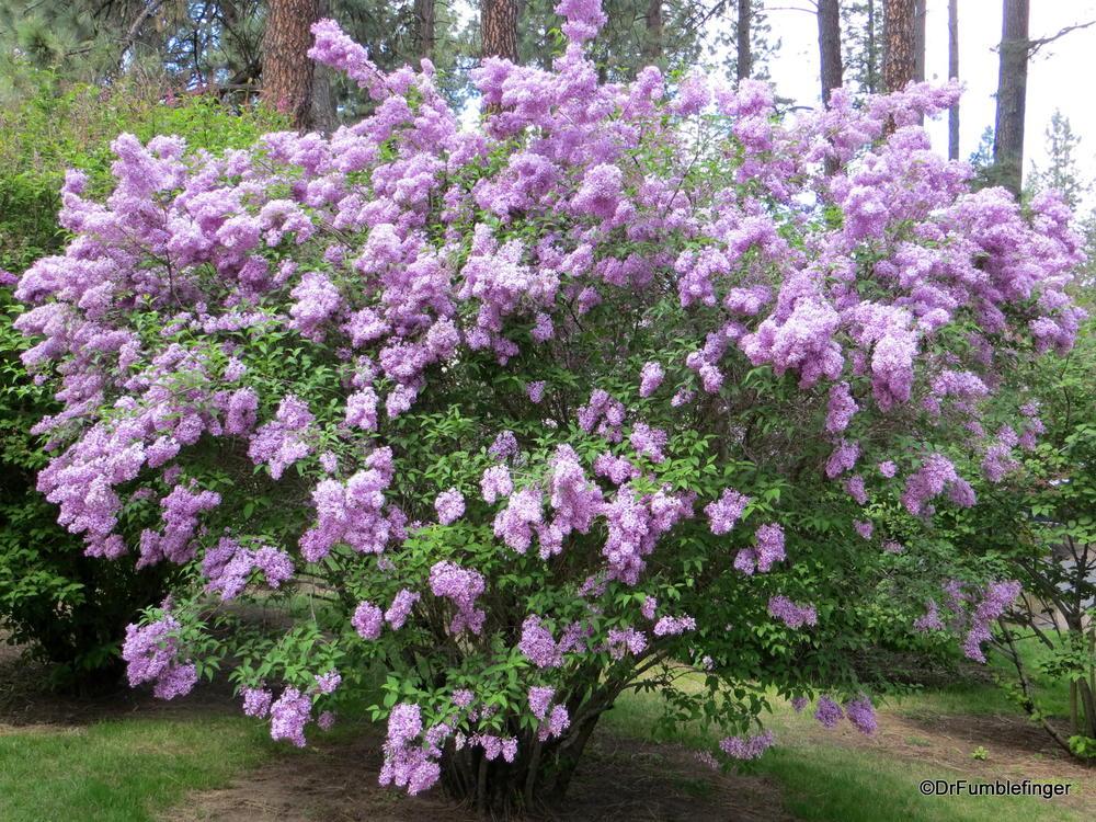 6196907be8c4 Gallery  Lilac Garden