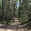 Tunnel Mountain trail,  Banff National Park