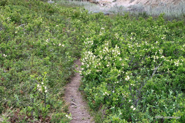 Path and wildflowers, Horseshoe Canyon
