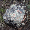 Lichens on a rock, Horseshoe Canyon