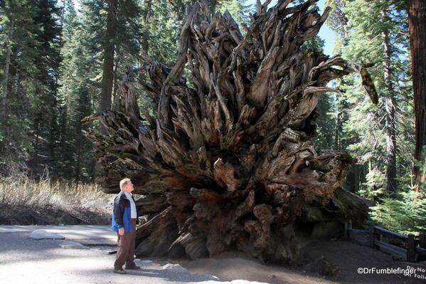 The Fallen Monarch, Mariposa Grove, Yosemite National Park