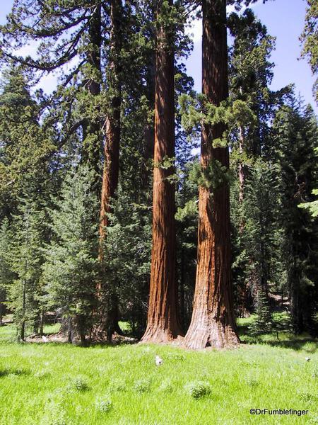 Upper Mariposa Grove, Yosemite National Park
