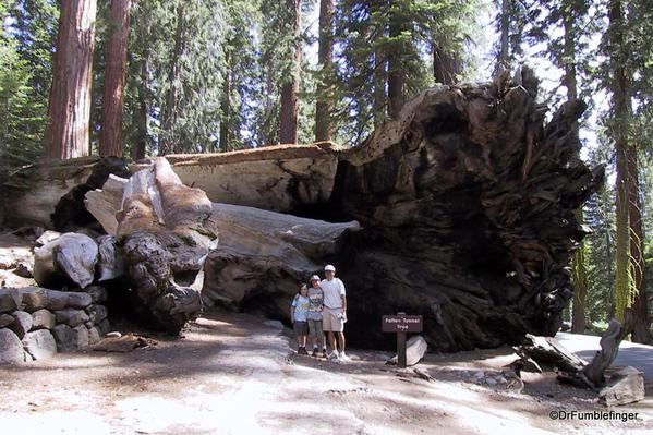 Fallen Tunnel Tree, Upper Mariposa Grove, Yosemite National Park