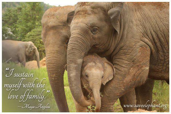 elephant.org