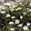 Sunshine Meadows --Wildflowers