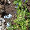 Sunshine Meadows -- Wildflowers