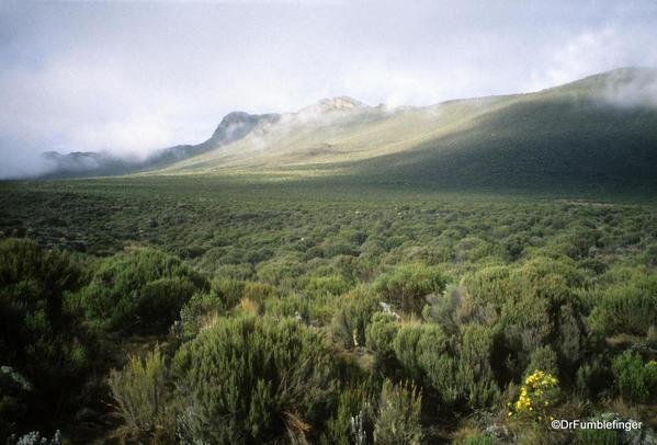 Mt. Kilimanjaro's Shira Plateau