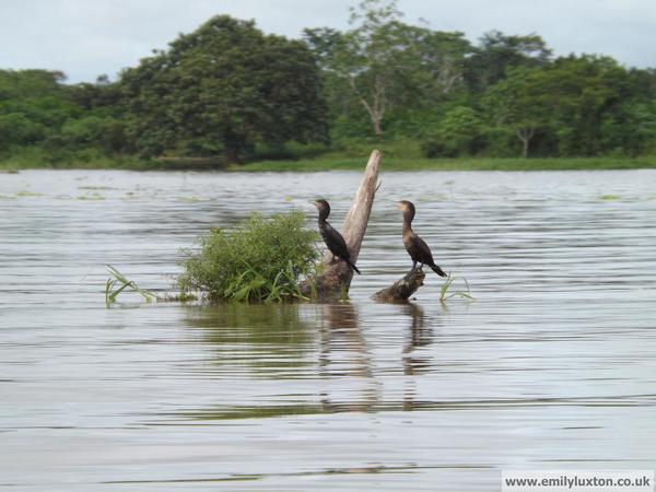 Birds on Amazon
