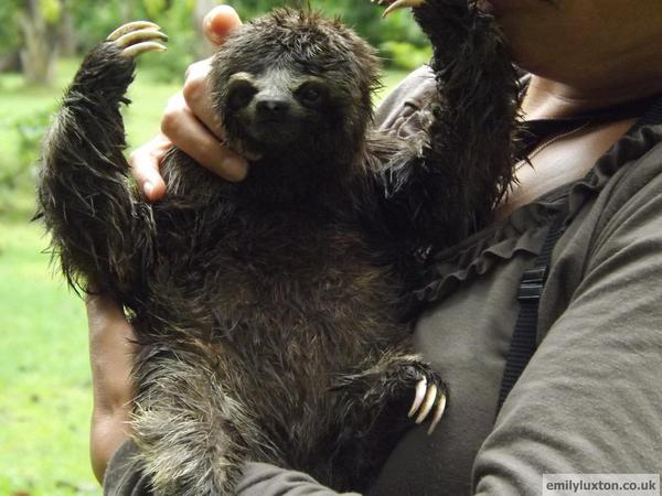 Rosita the Sloth