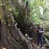 Wimba Tree