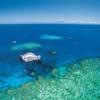 Reef 7