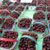 Bing cherries, St Catharines Market, Niagara Peninsula, Ontario
