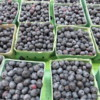 Blueberries, St Catharines Market, Niagara Peninsula, Ontario