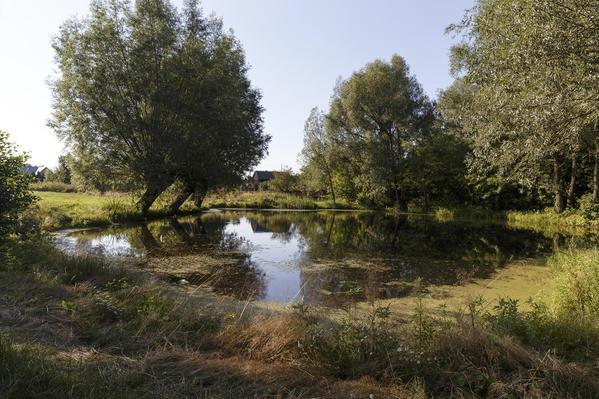 Lezenice Pond