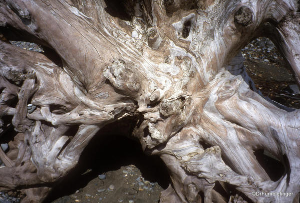 Driftwood, Haida Gwaii. East Beach Trail