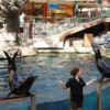 West Edmonton Mall, Sea Life Caverns and Sea Lions Rock