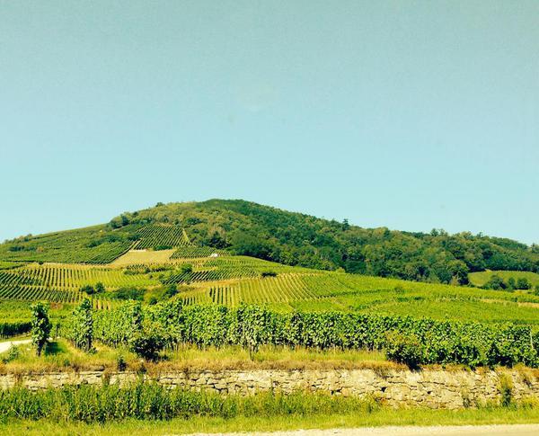 Alsace Route du Vin