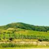 Alsace Route du Vin: Alsace Route du Vin