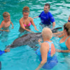 Puerto Vallarta Trainer for a Day.  Dolphin introduction