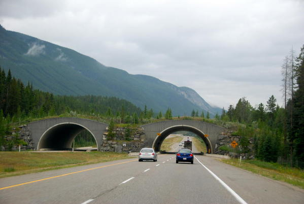 The TransCanada Highway has animal overpasses.