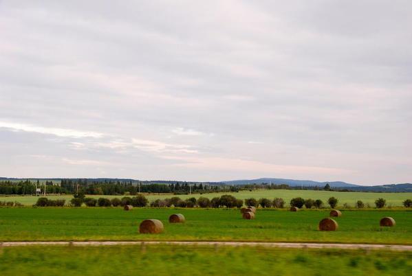 Prairie hayfields